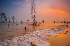 Μινιμαλιστική έννοια Bora-Bora στην παραλία, ηλιοβασίλεμα Με τα δέντρα θανάτου Στοκ Φωτογραφία