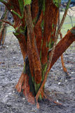 Μισον ψηφιολέξης δέντρο Στοκ Φωτογραφία