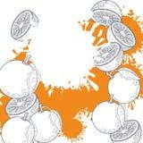 Μισός ζωηρόχρωμος παφλασμός περικοπών πορτοκαλιών ελεύθερη απεικόνιση δικαιώματος