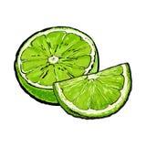 Μισός και τέταρτο του ώριμου πράσινου ασβέστη, συρμένη χέρι απεικόνιση διανυσματική απεικόνιση