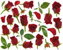 Μισό-ανοιγμένος κόκκινος αυξήθηκε φύλλα και πέταλα οφθαλμών στις διάφορες γωνίες επάνω Στοκ φωτογραφία με δικαίωμα ελεύθερης χρήσης