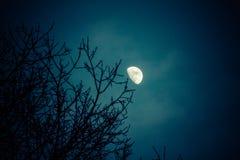 Μισό φεγγάρι πέρα από τις κορυφές δέντρων χειμερινών πεύκων στοκ εικόνες