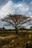 Μμένα δέντρα στο δάσος στοκ φωτογραφίες