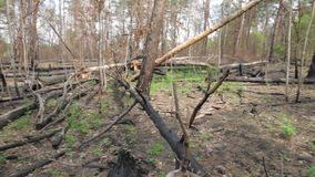 Μμένα δέντρα στο δάσος φιλμ μικρού μήκους