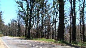 Μμένα δέντρα στις σειρές Dandenong, Αυστραλία φιλμ μικρού μήκους