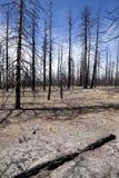μμένα δασικά δέντρα πυρκαγ&iot στοκ φωτογραφία με δικαίωμα ελεύθερης χρήσης