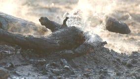 Μμένα στους άνθρακες, τα μαύρα δέντρα καπνίζουν στο κλίμα των ποδιών των ανθρώπων φιλμ μικρού μήκους