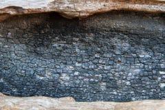 Μμένη ξύλινη σύσταση Στοκ Εικόνα