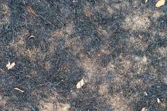 Μμένη χλόη, μμένο έδαφος Στοκ Φωτογραφία
