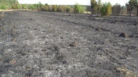 Μμένοι δάσος και τομέας μετά από την πυρκαγιά, μαύρο έδαφος, τέφρες, καπνός, επικίνδυνος καιρός έλξης, οικολογική καταστροφή φιλμ μικρού μήκους
