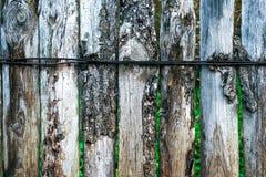 μμένοι πίνακες Ξύλινη ανασκόπηση Ένας φράκτης μια ημέρα φθινοπώρου στη φύση παλαιό δάσος σανίδων Με τα πράσινα φύλλα Στοκ Εικόνες