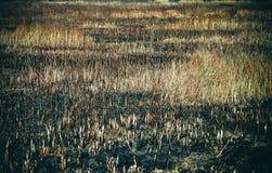 Μμένοι τομείς και ξηρά χλόη Στοκ φωτογραφία με δικαίωμα ελεύθερης χρήσης