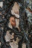Μμένος κορμός αναγεννημένος στοκ φωτογραφία με δικαίωμα ελεύθερης χρήσης