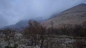 Μμένος forrests από μια πλευρά βουνών μετά από μια μεγάλη πυρκαγιά απόθεμα βίντεο
