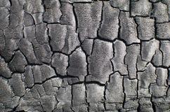 μμένο δάσος σύστασης Απανθρακωμένος πίνακας Στοκ εικόνα με δικαίωμα ελεύθερης χρήσης