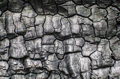 μμένο δάσος σύστασης Απανθρακωμένος πίνακας Στοκ Εικόνα