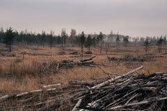 μμένο δάσος Στοκ Φωτογραφία