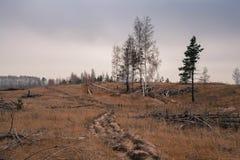 μμένο δάσος Στοκ Εικόνες