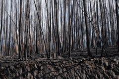 μμένο δάσος Στοκ φωτογραφία με δικαίωμα ελεύθερης χρήσης