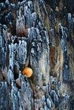 Μμένο δέντρο με τον πάγο Στοκ εικόνα με δικαίωμα ελεύθερης χρήσης
