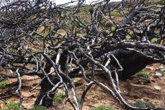 Μμένο δέντρο Στοκ φωτογραφίες με δικαίωμα ελεύθερης χρήσης