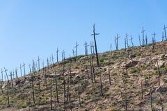 Μμένο δασικό σύνολο των σταυρών που γίνονται με τους κλάδους Στοκ εικόνες με δικαίωμα ελεύθερης χρήσης