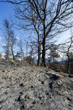 Μμένο δασόβιο τέντωμα στην Ελλάδα Στοκ φωτογραφία με δικαίωμα ελεύθερης χρήσης