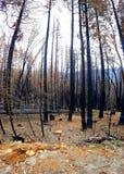 Μμένο sequoia δάσος στο εθνικό πάρκο Yosemite Στοκ φωτογραφία με δικαίωμα ελεύθερης χρήσης