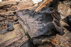 Μμένο Sequoias Sequoia εθνικό πάρκο Στοκ φωτογραφίες με δικαίωμα ελεύθερης χρήσης