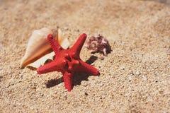 Μνήμες διακοπών από την παραλία, τα ψάρια θάλασσας και το κοχύλι Στοκ φωτογραφία με δικαίωμα ελεύθερης χρήσης
