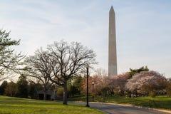 μνημείο Ουάσιγκτον κερασιών ανθών Στοκ Εικόνες