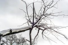 Μνημείο σε ένα σπασμένο δέντρο Στοκ φωτογραφίες με δικαίωμα ελεύθερης χρήσης