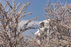 Μνημείο του Martin Luther King με τα δέντρα κερασιών Στοκ Εικόνα