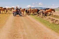 Μογγολικό άτομο στα άλογα κοπαδιών μοτοσικλετών Στοκ Εικόνες
