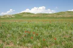 Μογγολικό Wildflowers Στοκ εικόνα με δικαίωμα ελεύθερης χρήσης