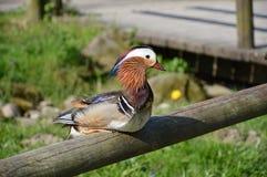 Μοιάζει με ένα ζωηρόχρωμο πουλί του αόρατου Στοκ Εικόνες