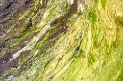 μολυσμένα νερά Στοκ Εικόνες