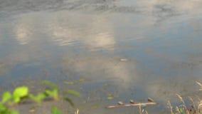 μολυσμένος ποταμός Σκουπίδια στο νερό Η ανθρώπινη δραστηριότητα επιδεινώνει την οικολογία Εστίαση αλλαγής φιλμ μικρού μήκους
