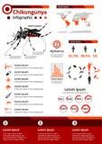 Μολυσματική ασθένεια Infographics - Chikungunya Στοκ Εικόνα