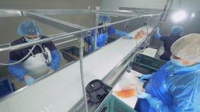 Μονάδα εγκαταστάσεων ψαριών με το σολομό που παίρνει επεξεργασμένο από τη γυναίκα υπάλληλοι απόθεμα βίντεο