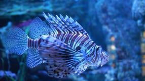 Μοναδικά ριγωτά ψάρια στοκ φωτογραφίες με δικαίωμα ελεύθερης χρήσης
