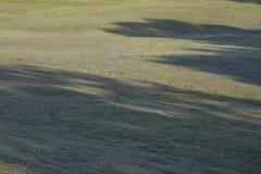 Μοναδικό υπόβαθρο με τα μαγικά sunrays, ηλιοφάνεια, φως στην πράσινη χλόη, λιβάδι, μέρος 4 τομέων στοκ εικόνες
