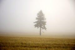 Μοναξιά πρωινού Στοκ εικόνες με δικαίωμα ελεύθερης χρήσης
