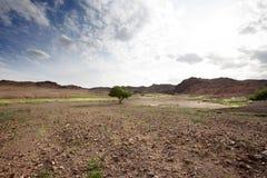 Μοναξιά στην έρημο Στοκ φωτογραφίες με δικαίωμα ελεύθερης χρήσης