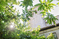 Μοναστήρι Santa Cristina de Ribas de Sil Γαλικία Στοκ Φωτογραφίες