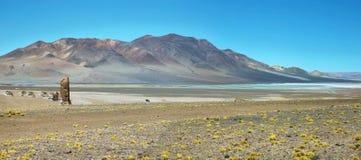 Μοναχοί Pakana, Χιλή Στοκ Εικόνα