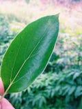 Μοναδικά φύλλα Στοκ εικόνα με δικαίωμα ελεύθερης χρήσης