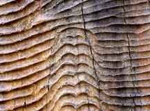 Μοναδική ξύλινη φωτογραφία αποθεμάτων υποβάθρου μορφής Στοκ Εικόνα