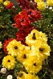 Μοναδική ποικιλία λουλουδιών στο κόκκινο και κίτρινος Στοκ Εικόνες
