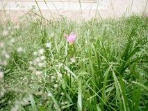 Μοναδικό ρόδινο λουλούδι στοκ εικόνα με δικαίωμα ελεύθερης χρήσης